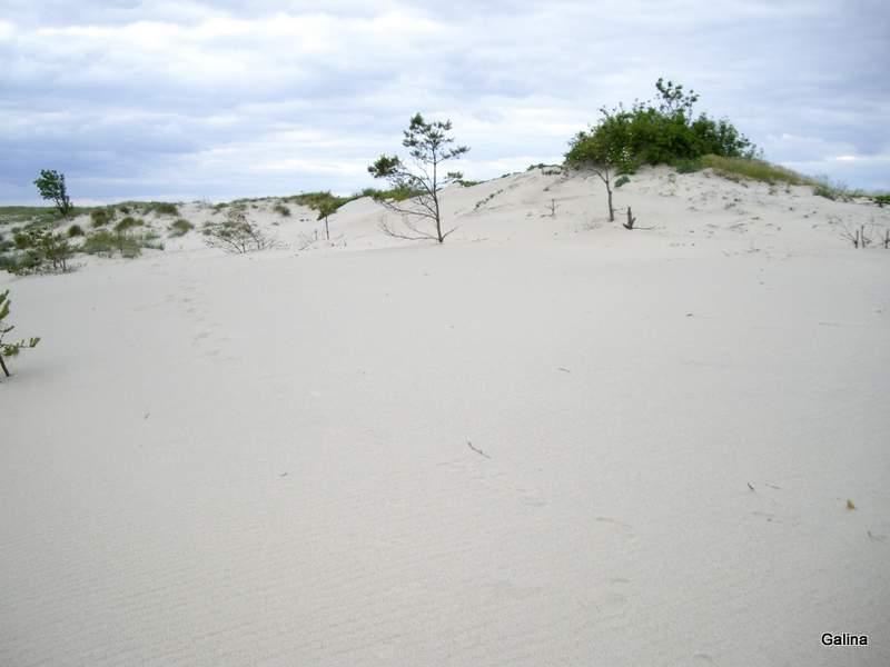 Балтийская коса, песчаные дюны
