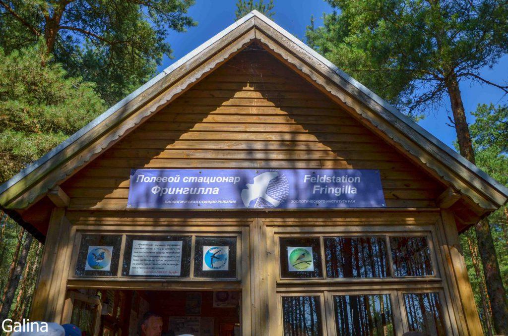 Орнитологическая станция Фрингилла на Куршской косе