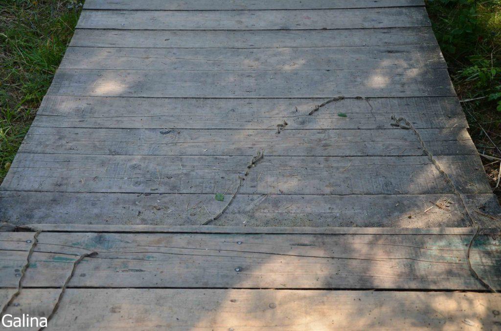 Сосновый походный шелкопряд
