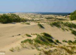 Высота Эфа на дюне Ореховая