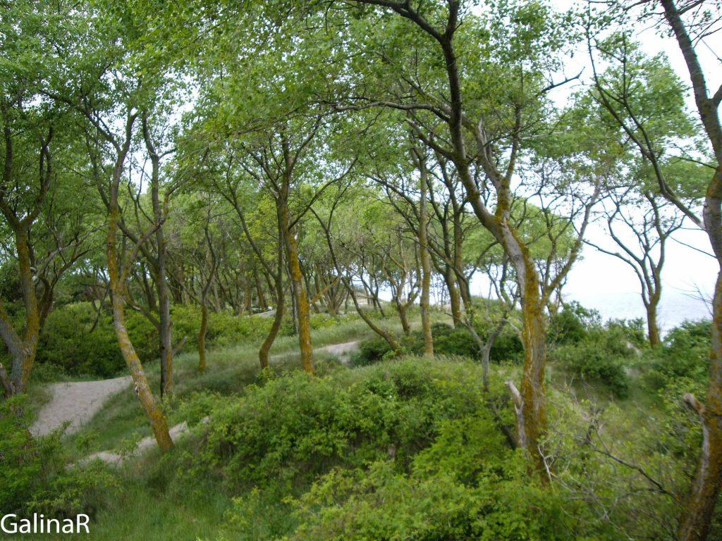 Вид с дальномерного бункера на лес