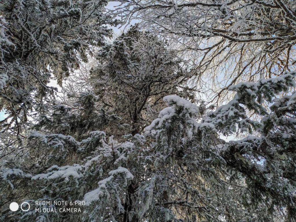 Заснеженные деревья на хребте Зигальга