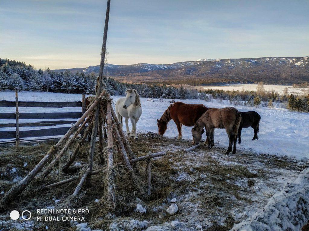 Лошади в селе Тюлюк