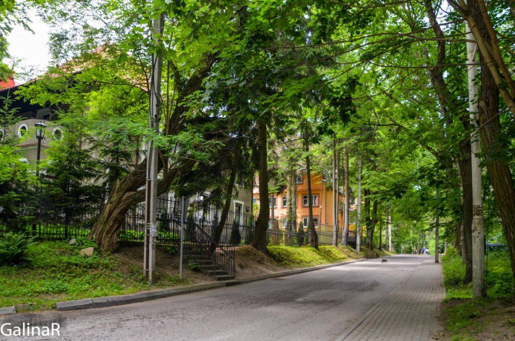Зелёные улицы Светлогорска