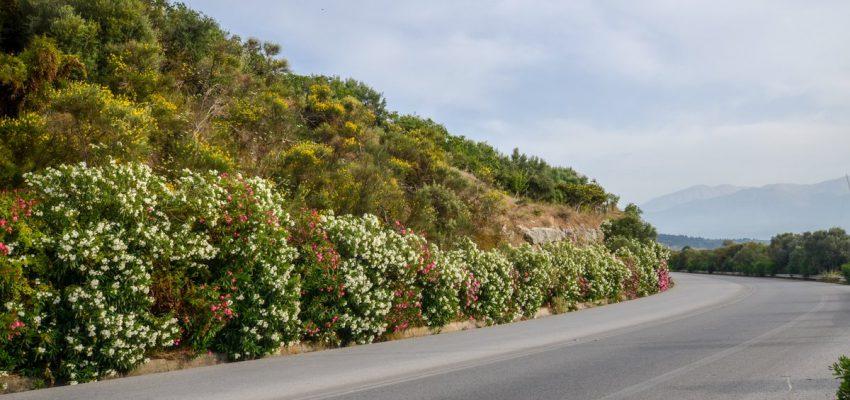 Цветущие дороги Крита