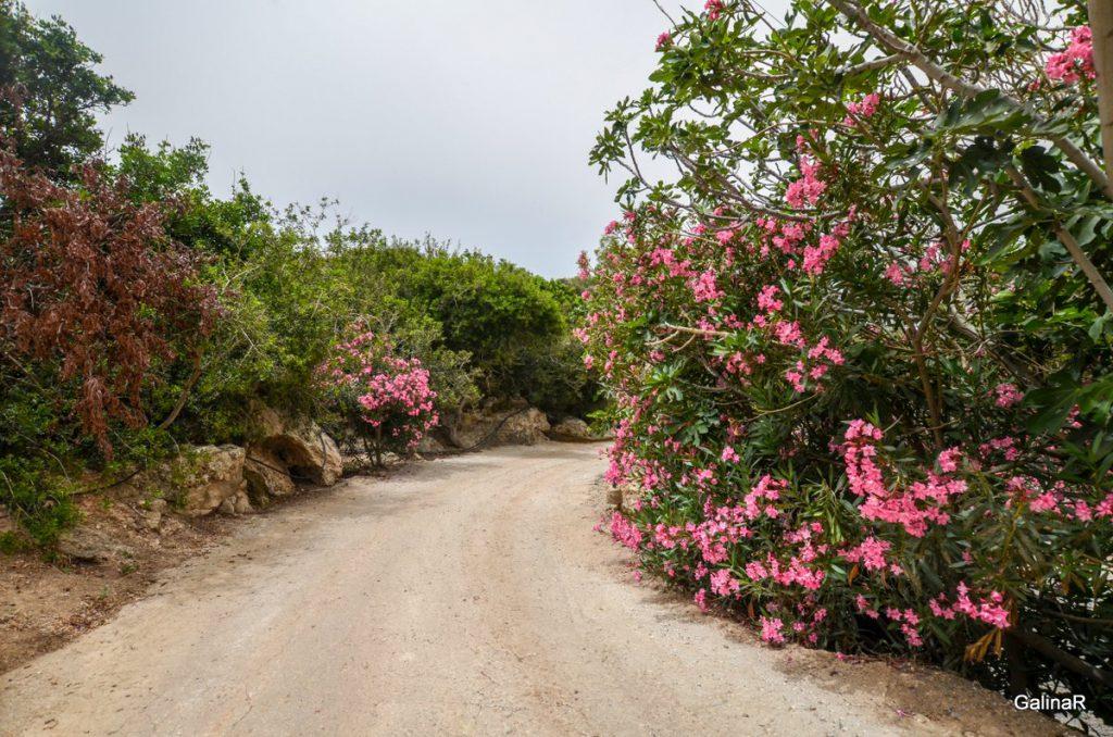 Грунтовые дороги Крита