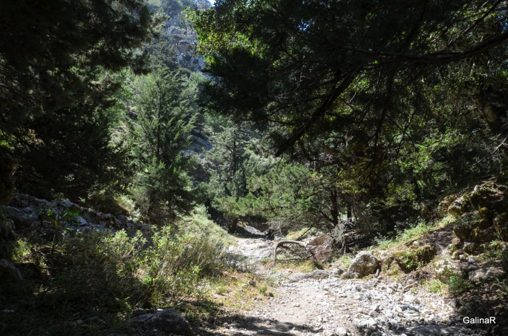 Тропа в ущелье Имброс на Крите