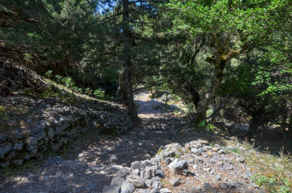 Прогулка по Ущелью Имброс на Крите