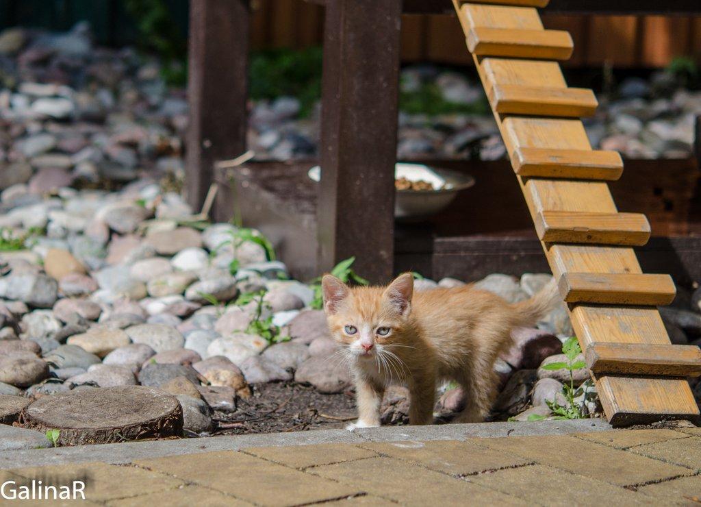 Домик для котов в Зеленоградске