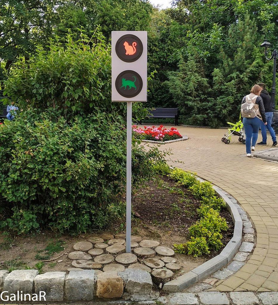 Светофор для котов в Зеленоградске