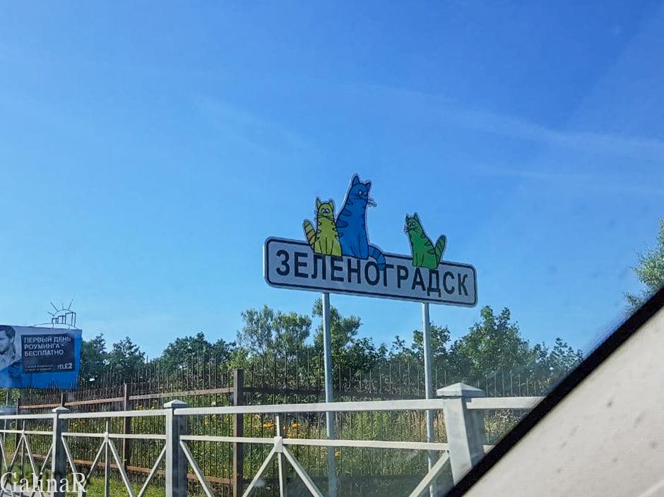 Зеленоградск город котов